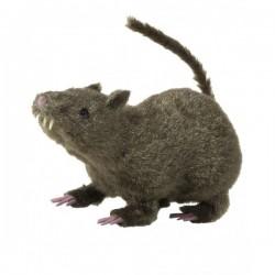 Rata peluda marrón - Imagen 1
