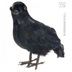 Cuervo tétrico - Imagen 1