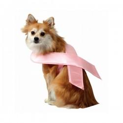 Cinta rosa para perro - Imagen 1